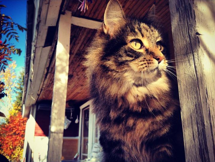 the lapland photographer casper katt gallejaur på spaning