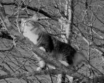Black and white cat in a tree