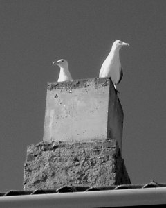 Birds in a chimney