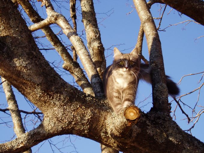 Kajsa the cat in the tree