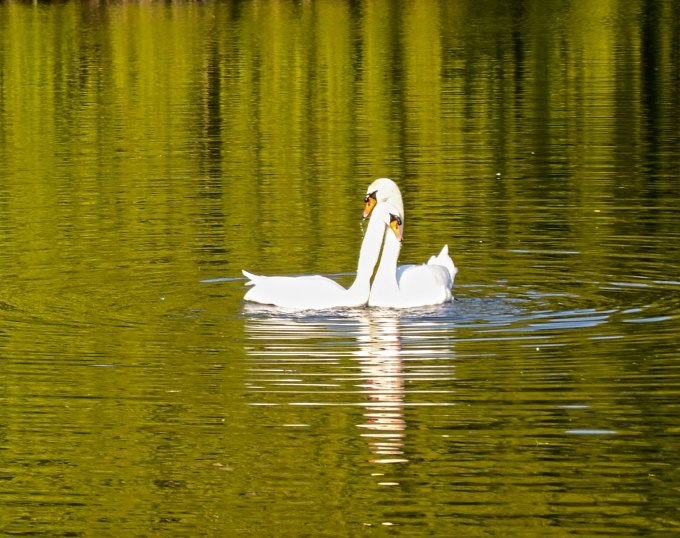Mr and Mrs Swan