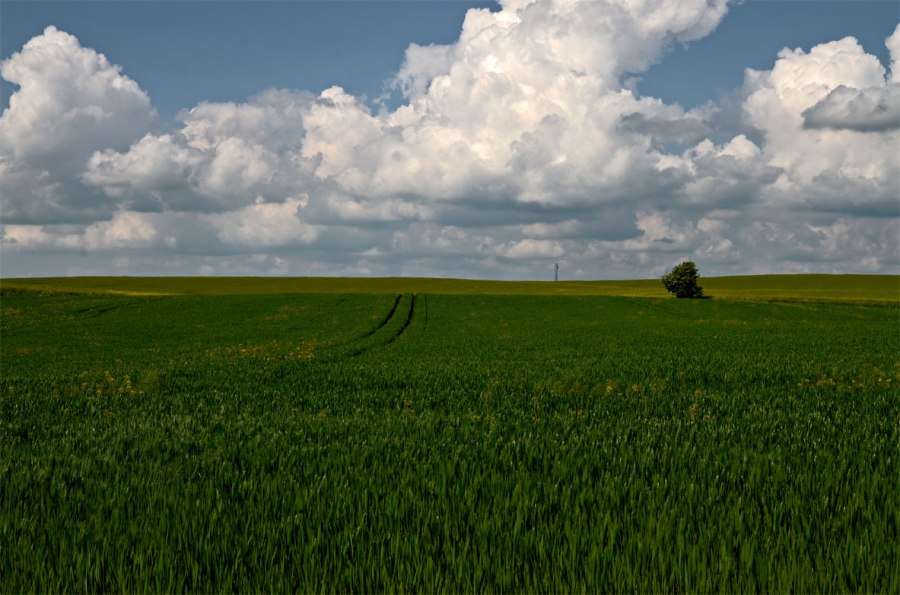 Onnarp_Skurup_Fields2